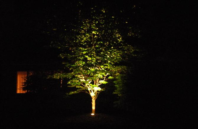 Landscape lighting for trees democraciaejustica landscape lighting trees aloadofball Image collections